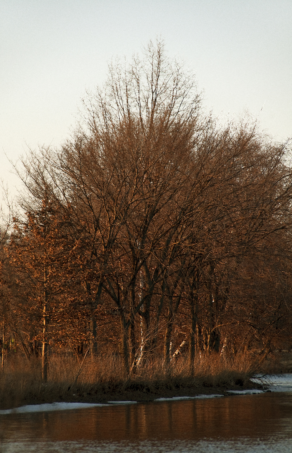 Which Trees Are Used To Make Paper: Charles River Page